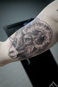 auns-ram-animal-dzivnieks-tetovejums-tattoo-tatoofrequency-riga-art-janissvars