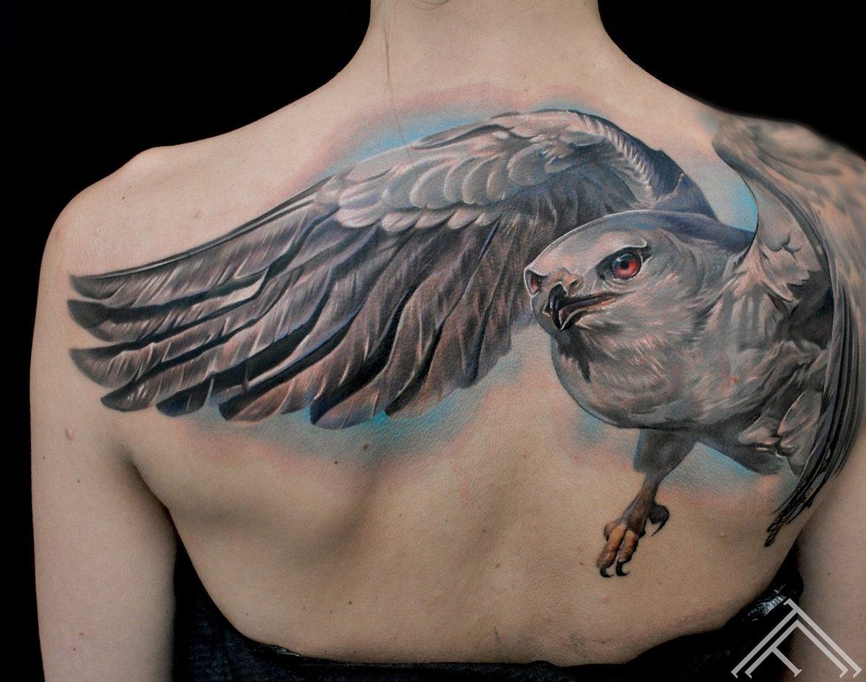 hawk-bird-wing-putns-vanags-spalvas-tattoofrequency-riga-maksla-art