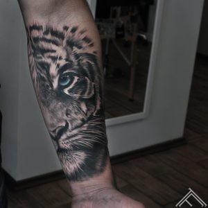 tiger-tigeris-dzivnieks-animal-johnloganriga-latvija