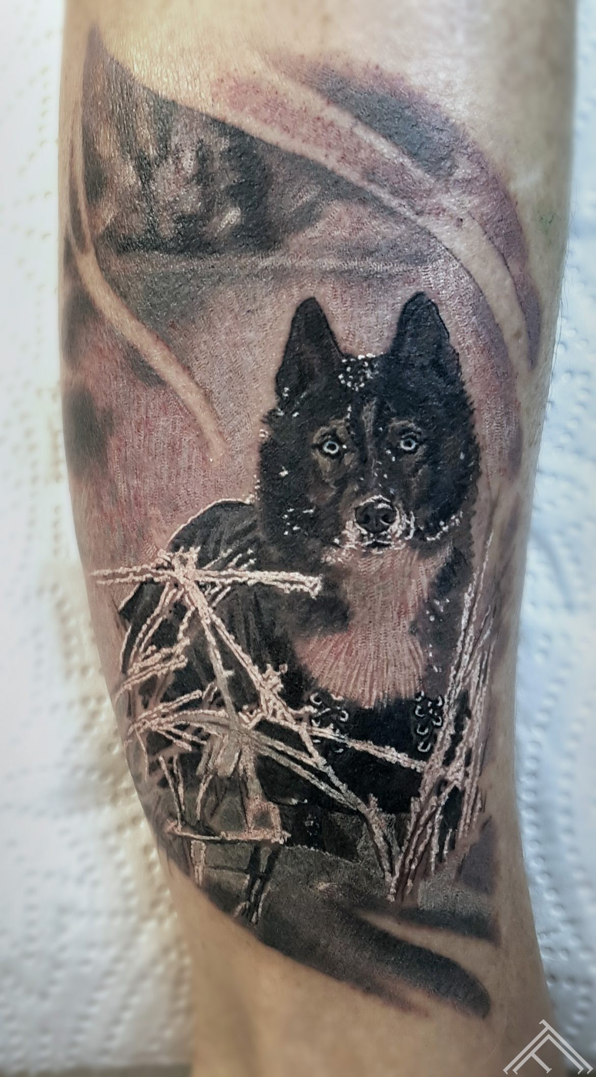 dog-suns-tetovejums-tattoo-tattoofrequency-bezudenszimes