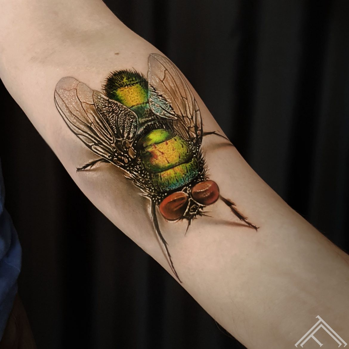 fly-tattoo-tattoofrequency-marispavlo