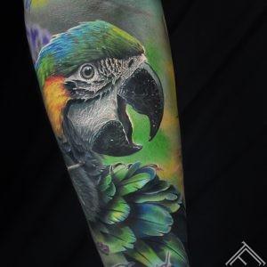 papagailis-parrot-ara-macaw-bird-putns-tetovejums-tattoo-tattoofrequency-riga-marispavlo