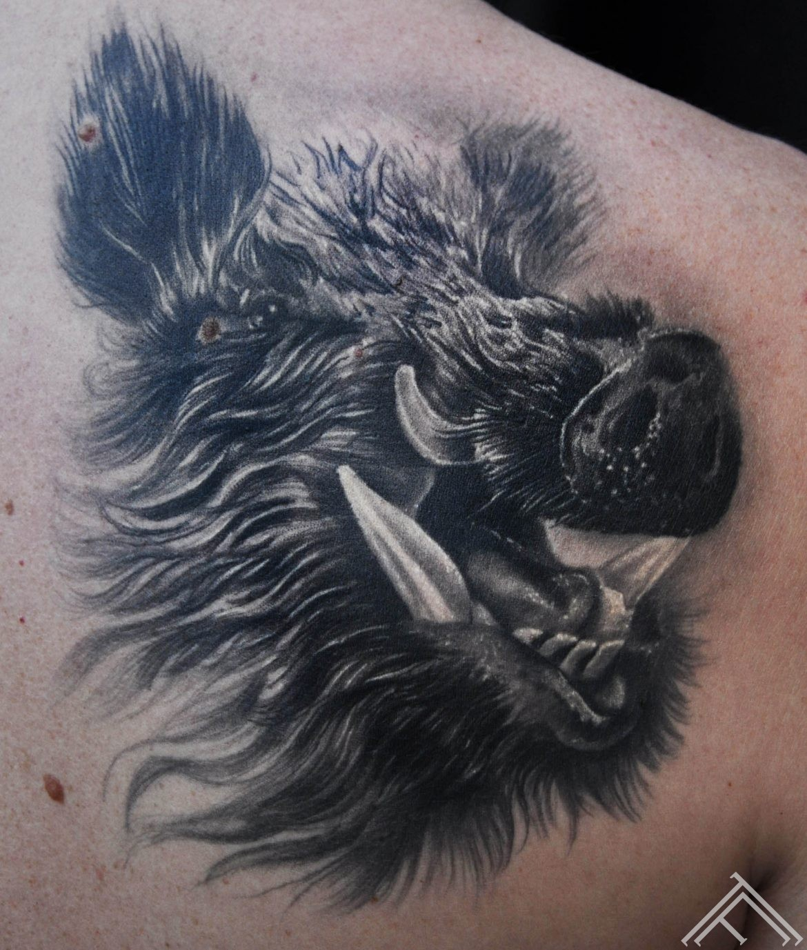 tattoo-pig-boar-tatoofrequency-tattoosaloon-tattoorigastudio