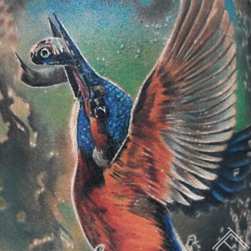 kingfisher-closeup-bird-fish-dzenitis-zivs-tattoo-tattoofrequency-riga-art